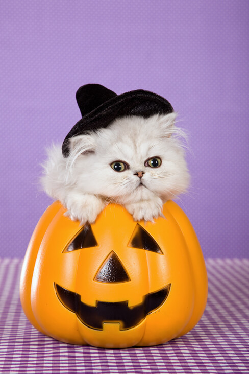 Happy Halloween! (ノ◕ヮ◕)ノ*:・゚✧